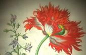 Merian-Blumenmotiv-1